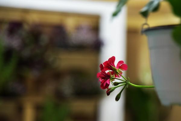 expo-flowers-and-garden-si-romenvirotec-2016-8B2746C1B-1556-A13B-1201-C6007E0AC560.jpg