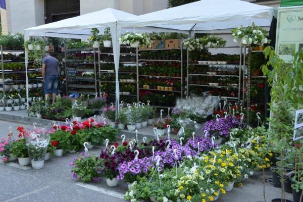 hortus-florshow-2015-145774B6B8-5257-6499-AF04-48E6E6202FE6.jpg
