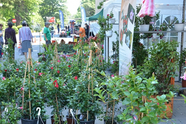 hortus-florshow-2015-53FA52E79-AC7C-2001-0572-971CB6D4CD9F.jpg